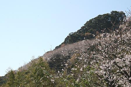 sakura327.JPG