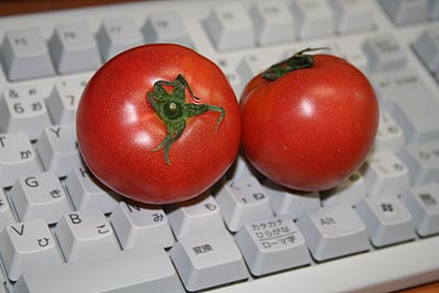 tomato330.JPG